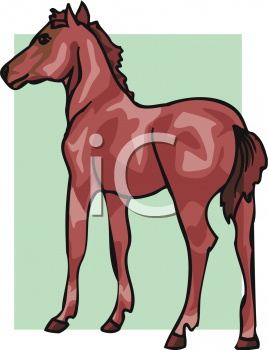Brown Colt or Filly