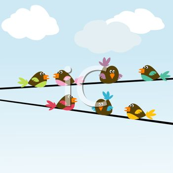 Cute Birds Sitting on Telephone Wires