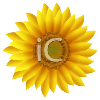 Yellow Daisy or Sunflower