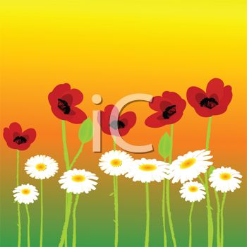 Watercolor Poppies and Daisies Summer Design