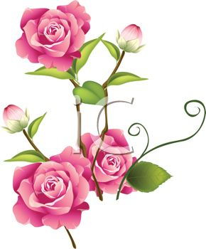 Pretty Pink Roses and Rosebuds