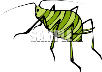 Tiny striped green insect with fat body and little head