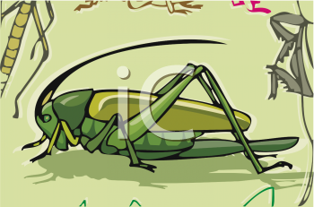 Grasshopper, Locust or cricket in its natural environment