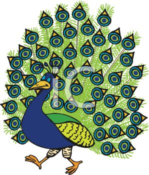 cartoon of a peacock with his feathers spread out walking proudly