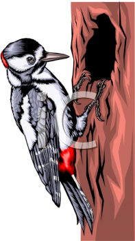 clip art illustration of a woodpecker sitting in a tree