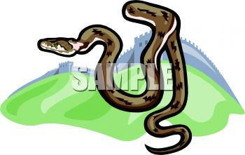 picture of a brown snake ready to strike in a vector clip art illustration