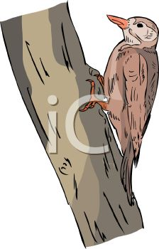 Image of a woodpecker sitting on a tree branch in a vector clip art illustration