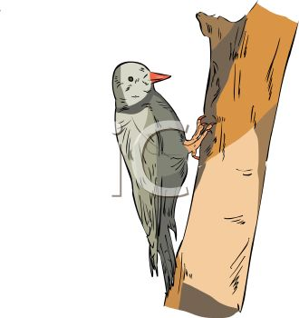 image of a woodpecker on a tree in a vector clip art ilustration