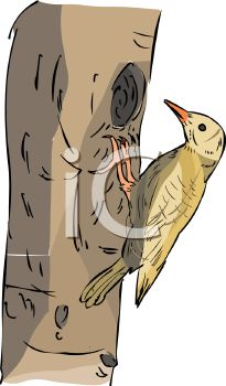image of a woodpecking pecking a whole in a tree in a vector clip art illustration