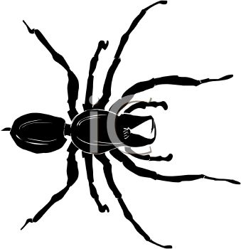 Illustration of a spider on a white background in a vector clip art illustration