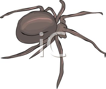 image of a spider in a gray scale in a vector clip art illustration