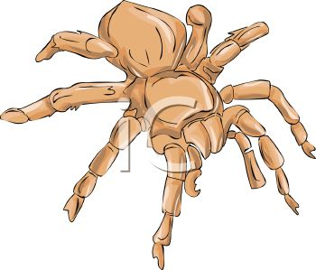 PIcture of a brown tarantula spider in a vector clip art illustration