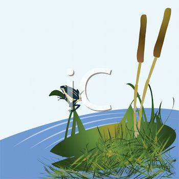 Picture of a pond with a lily pad and cattails and a frog sitting on a branch in a vector clip art illustration