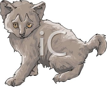 picture of a young gray kitten in a vector clip art illustration