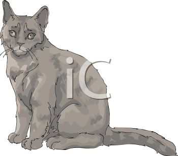 picture of a gray cat sitting looking at straight ahead in a vector clip art illustration