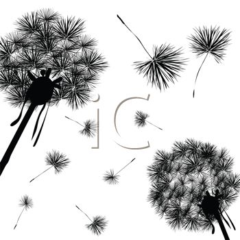 dandelion wishy blows in silhouette. make a wish