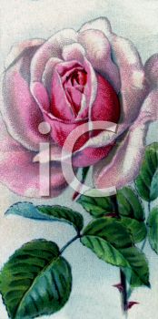 picture of a pink rose on the vine with green leaves in a vector clip art illustration