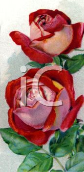 picture of red roses on the vine in a vector clip art illustration