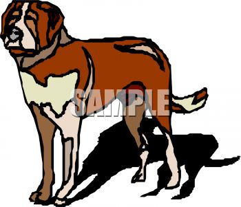 picture of a saint bernard standing up with his shadow behind him in a vector clip art illustration