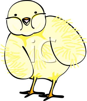 picture of a fuzzy cute baby chick standing in a vector clip art illustration