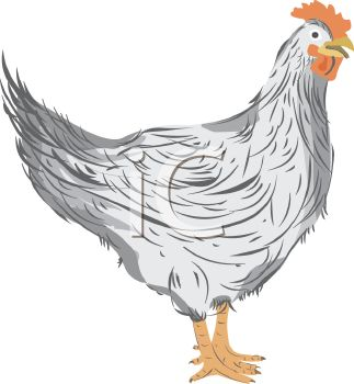 Picture Of A Rooster Standing In a vector clip art illustration