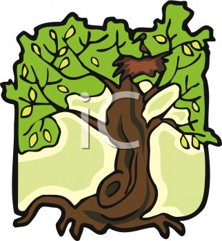 picture of a tall tree with a bird and birds nest in the branches in a vector clip art ilustration