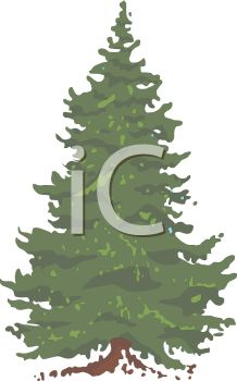 picture of a bushy pine tree in a vector clip art illustration