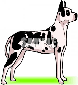 picture of a great dane in a vector clip art illustration