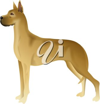 picture of a golden great dane in a vector clip art illustration