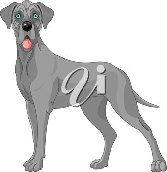 Picture of a grey colored great dane in a vector clip art illustration
