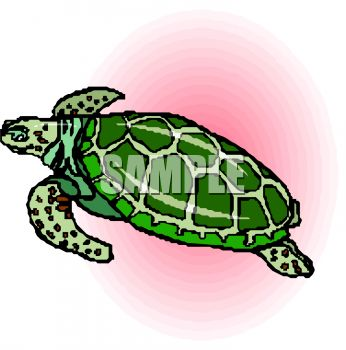 picture of a tortoise swimming in a vector clip art illustration
