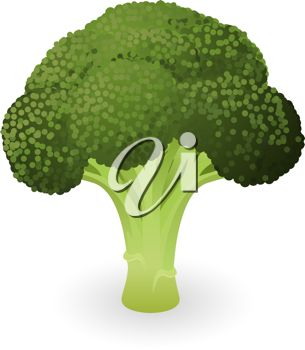 picture of a stalk of fresh broccoli in a vector clip art illustration
