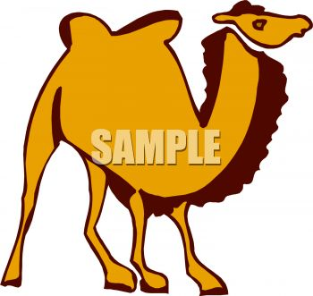 Picture of a Cartoon Camel In a Vector Clip Art Illustration ...