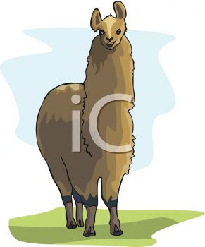 picture of a cartoon llama standing in the grass in a vector clip art illustration