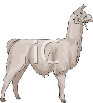 picture of a llama standing in a vector clip art illustration