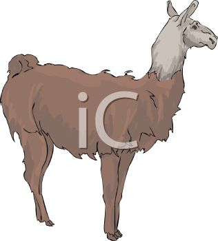 picture of a llama shedding in a vector clip art illustration
