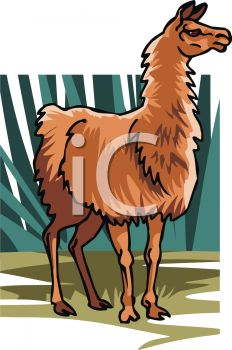 picture of a brown llama standing in a vector clip art illustration