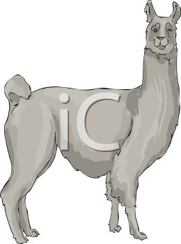 Picture Of A Llama With A Funny Face In A Vector Clip Art