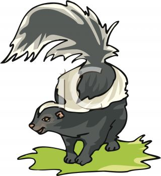 pictureof a skunk standing on grass with his tail up in a vector clip art illustration