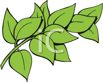 picture of green leaves on a stem in a vector clip art illustration