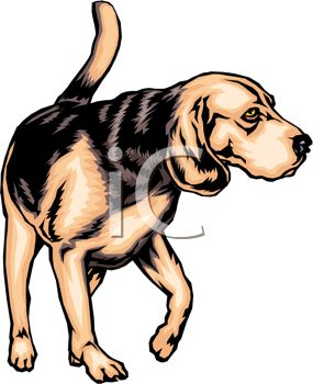 picture of an adult beagle walking around in a vector clip art illustration
