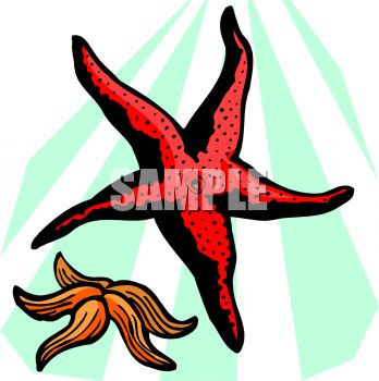 picture of two starfish underwater in a vector clip art illustration