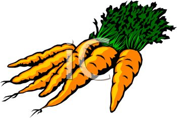 picture of fresh carrots from the garden in a vector clip art rh clipartguide com carrot clip art free images carrots clipart