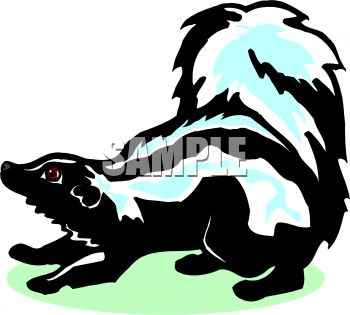 picture of a skunk with his tail in the air in a vector clip art illustration