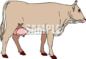 Picture of a cow in a vector clip art illustration
