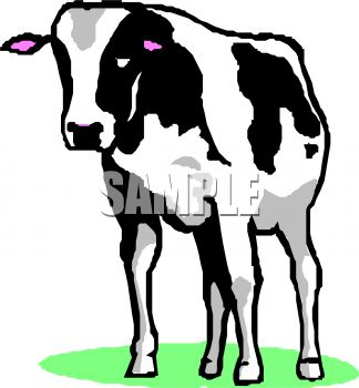 Picture of a black and white cow standing in grass in a vector clip art illustration