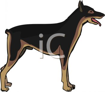picture of a doberman pinscher standing up in a vector clip art illustration