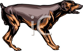 picture of a doberman standing and growling in a vector clip art illustration