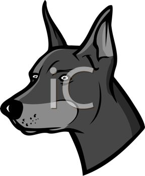 picture of the head of doberman in gray scale in a vector clip art illustration