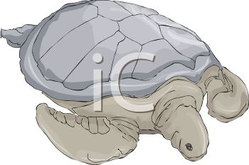 picture of a turtle in a vector clip art illustration